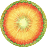 mandala de zon